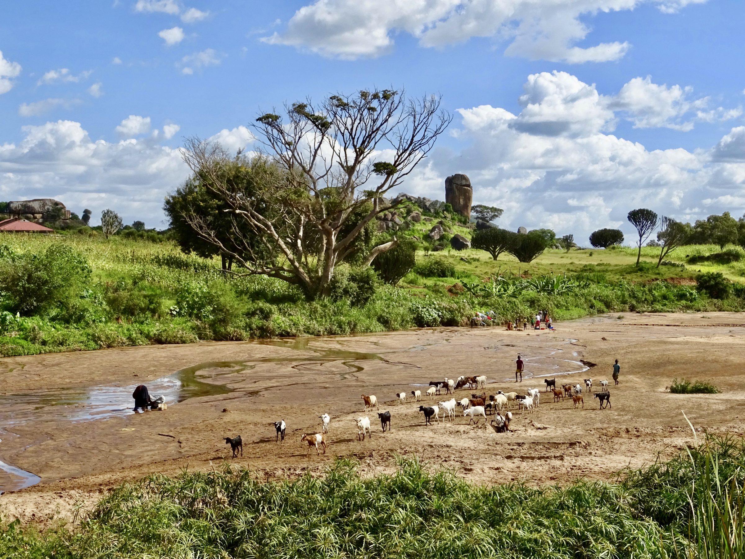 Een kudde geiten wandelt door een bijna droge rivierbedding in Kaabong