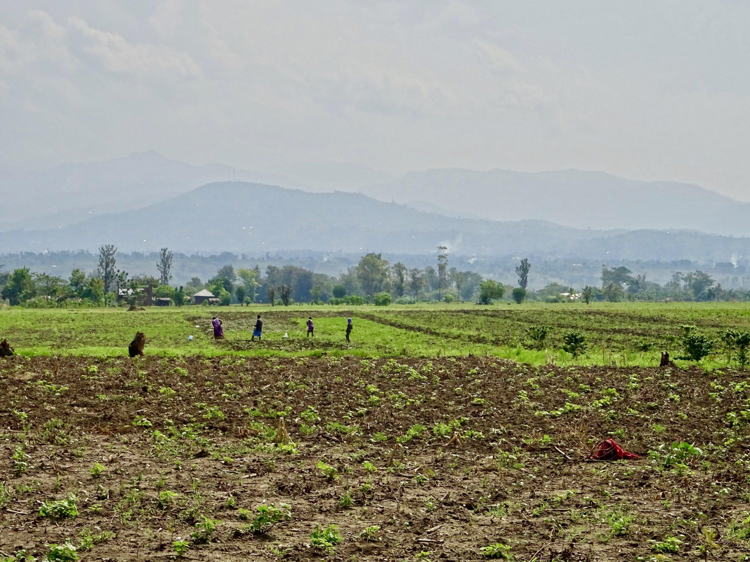 Landarbeiders met op de achtergrond het Ruwenzori gebergte