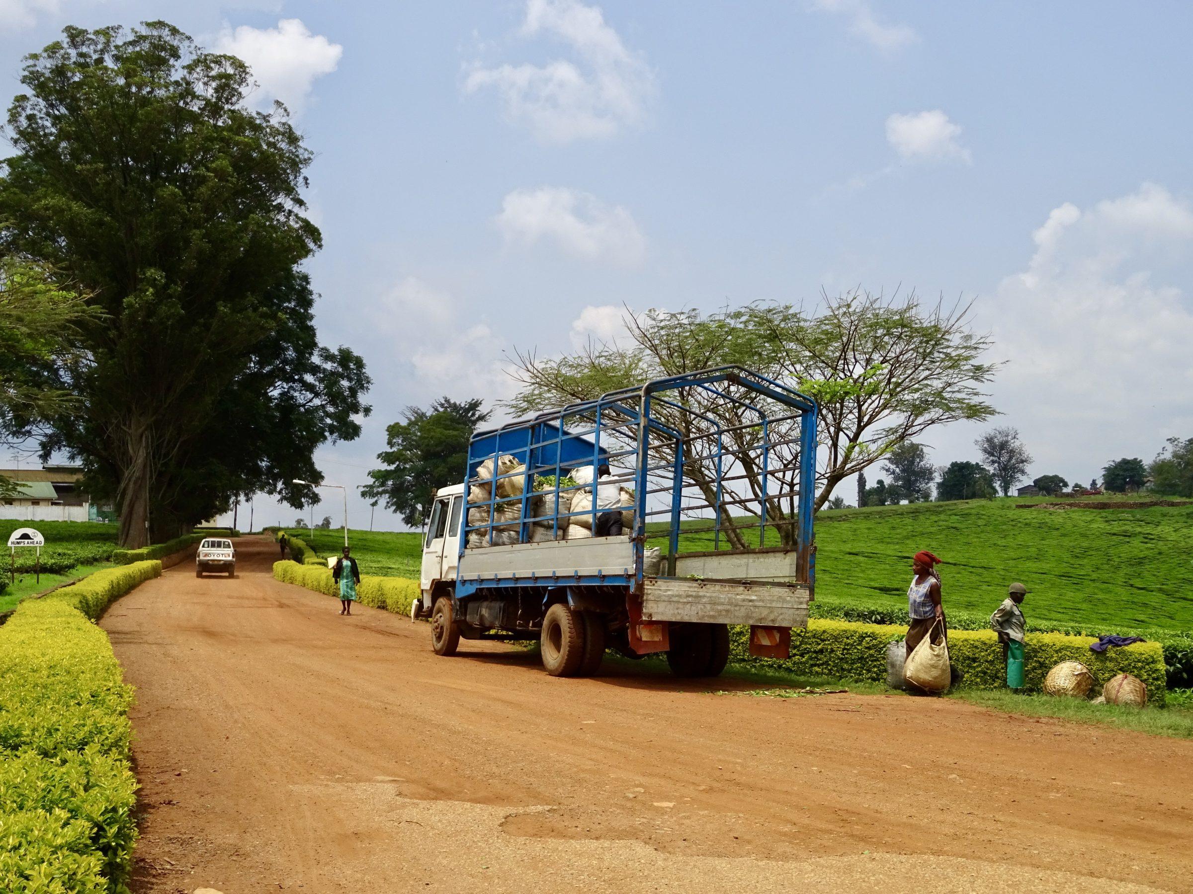 Rwandese theeplukkers deponeren hun oogst in de pick-up in Fort Portal