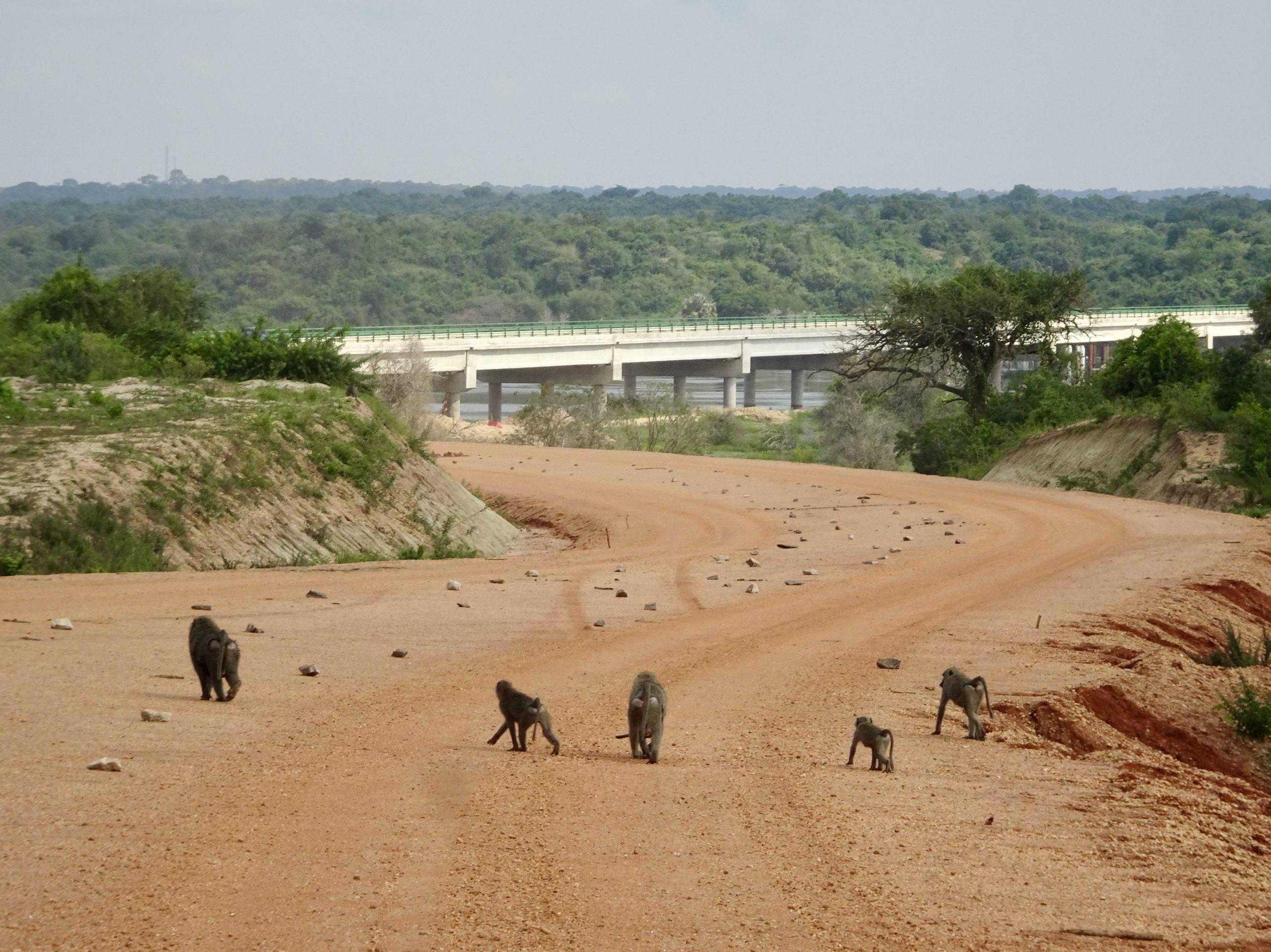 De nieuwe brug over de Nijl bij Paraa, Murchison Falls NP