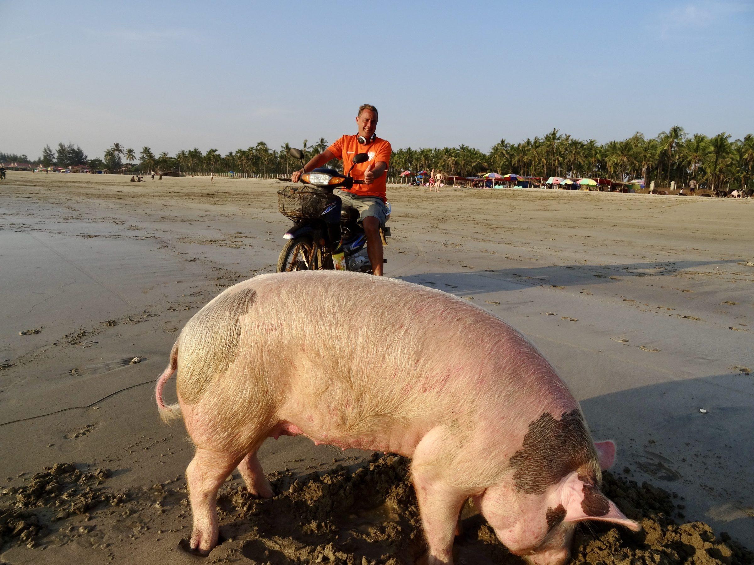 In goed gezelschap op het strand van Ngwesaung, Myanmar