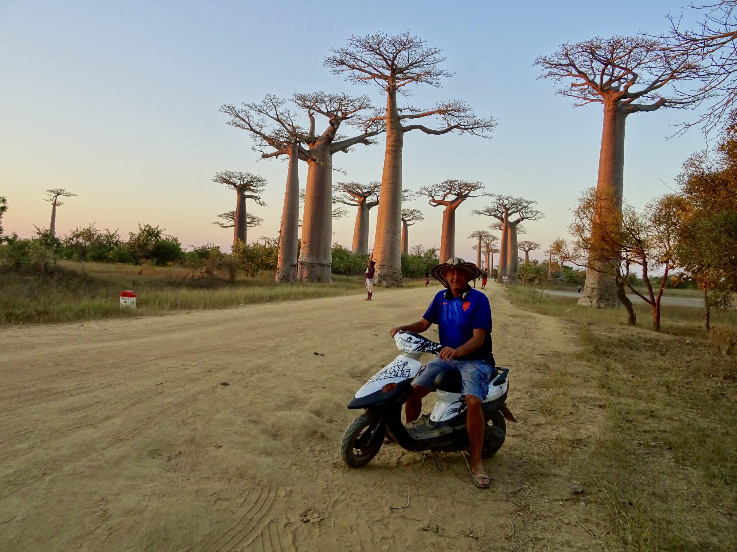 De fameuze Baobablaan nabij Morondava