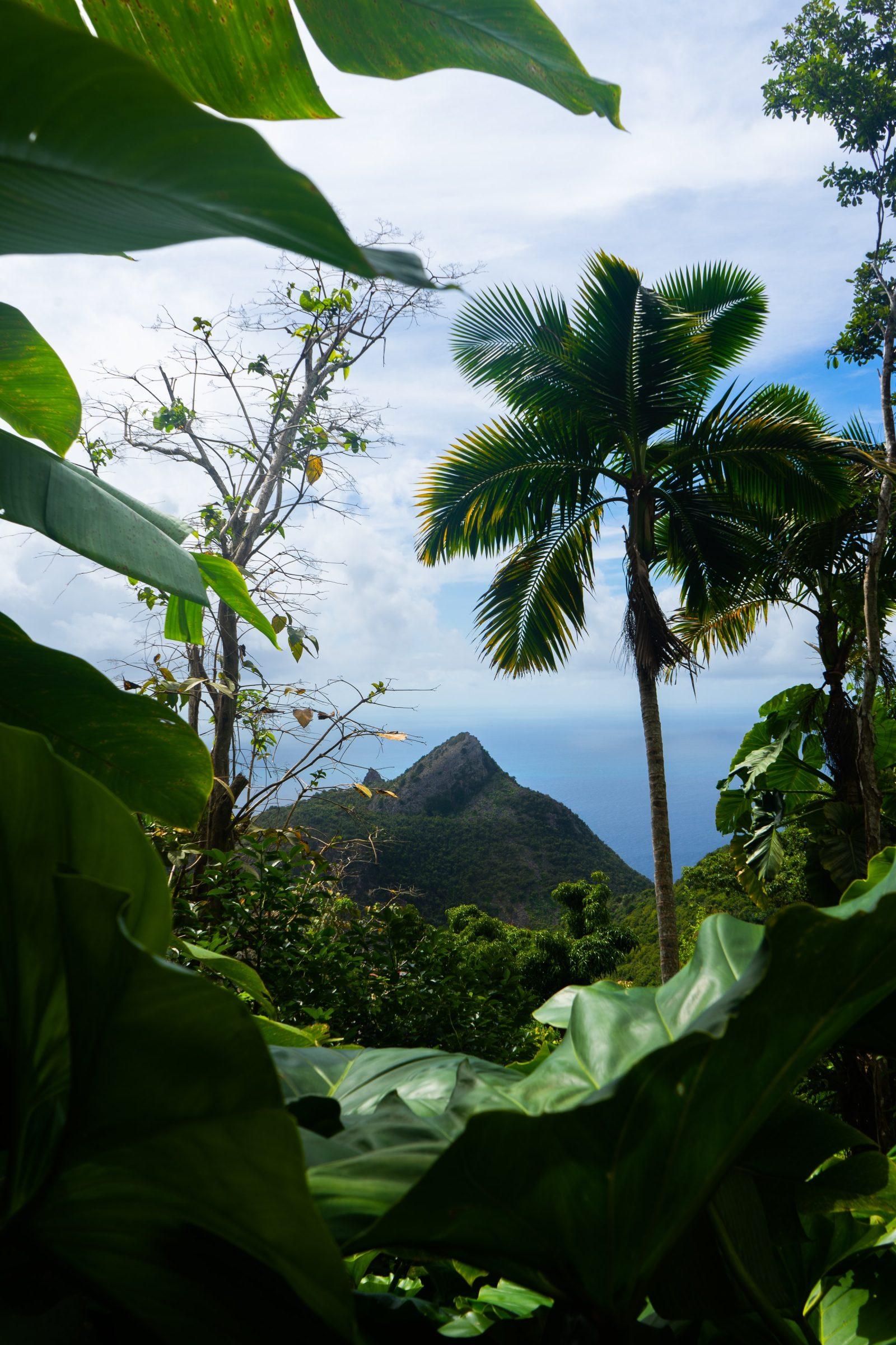 De jungle van Saba
