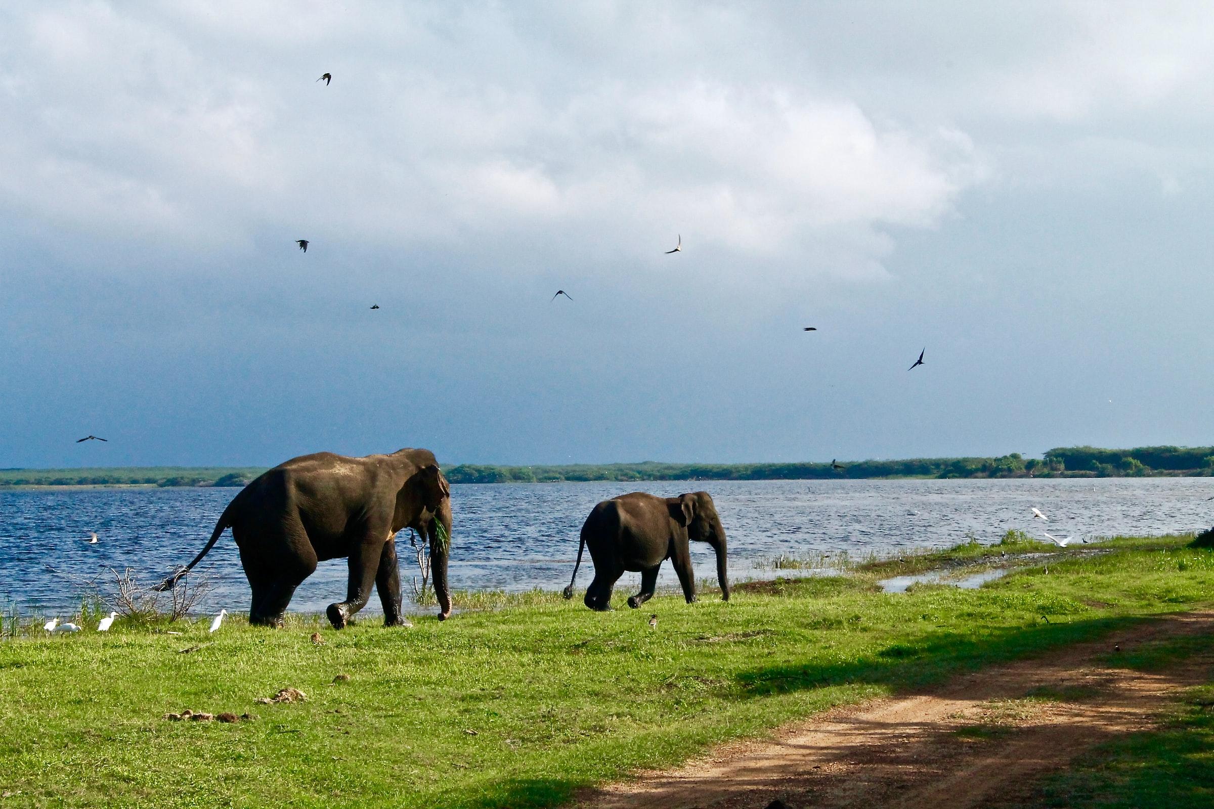 sri lanka opent grenzen toeristen
